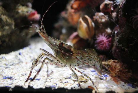 Fish Crab