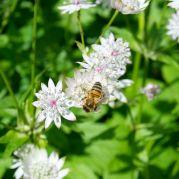 brighton bee