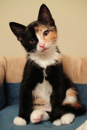 eeeee kitten belly